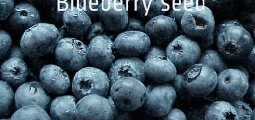 blueberries_500_480_zpsd50a29c3